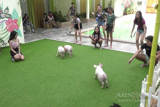 PBB Otso Teens Day 21: Teen Housemates, nakipaghabulan sa mga baby pigs sa pool